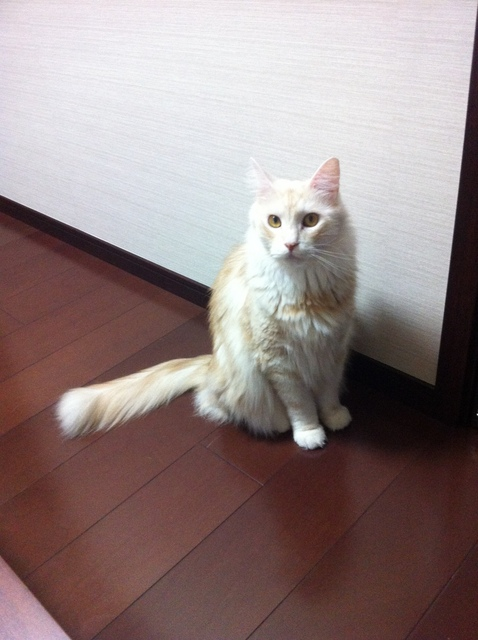 Keiko Kitagawa's cat Jill