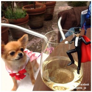 Chihuahuas in Sailor Moon costumes - Sailor Chibi Moon and a Tuxedo Mask figure
