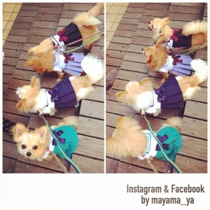 Chihuahuas in Sailor Moon costumes - Sailor Pluto, Sailor Saturn, Sailor Uranus and Sailor Neptune