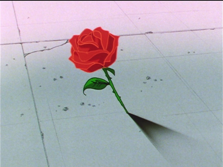 Sailor Moon Sailor Stars episode 194 - Seiya's rose
